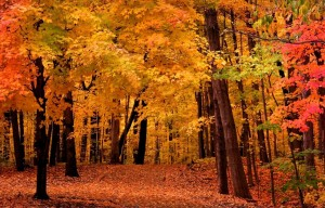 Fall Foliage, Photo credit: metromilwaukeeliving.com