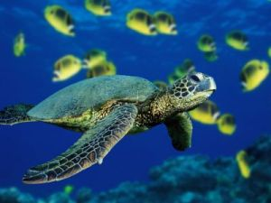 Photo source: http://www.seaturtlenet.com/