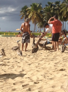 Beachgoers petting the pelicans, Crash Boat Beach