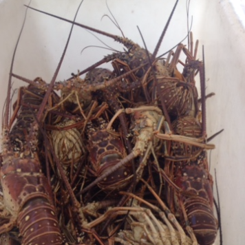 Fresh lobster served daily