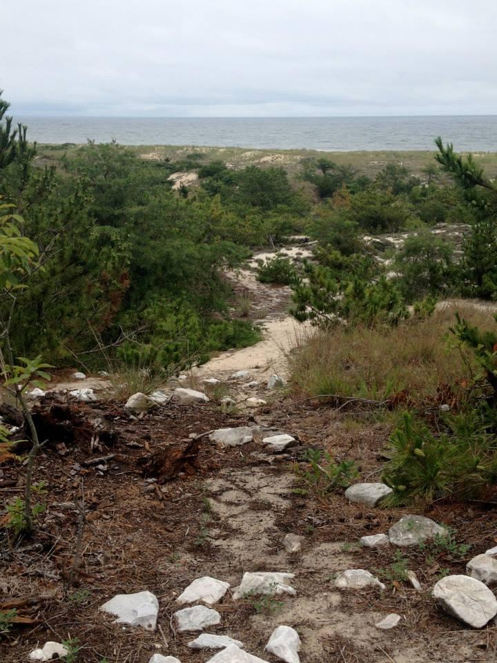 Cape Henlopen State Park Beach View