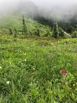 Mt. Rainier Revelry
